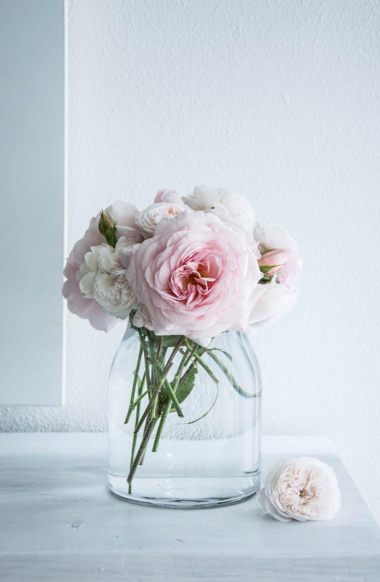 Anglické ruže z našej záhrady